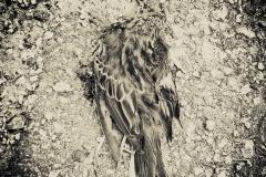 Höstbetraktelse-dödfågel-1400