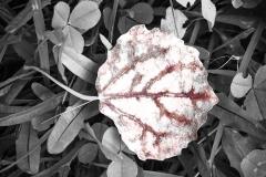 Höstbettraktelse-asplöv-1400